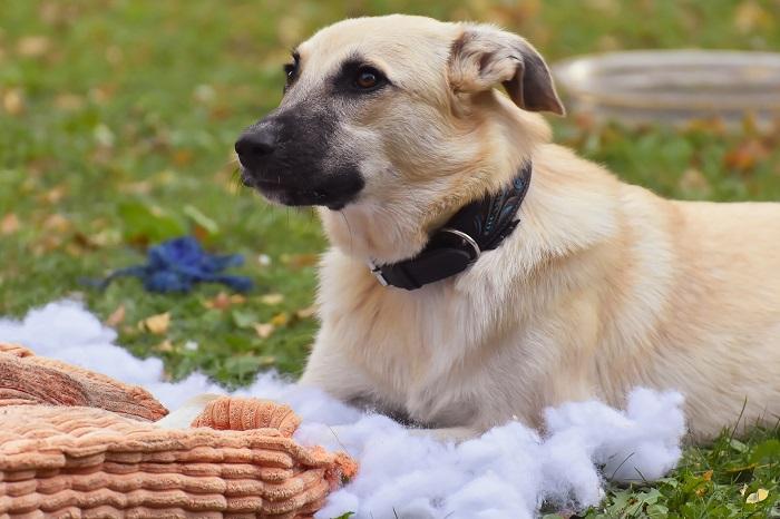 Vankus pre psa na záhradu